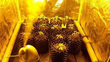 Growbox Bewässern
