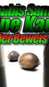 Cannabis Samen in Deutschland Online Kaufen